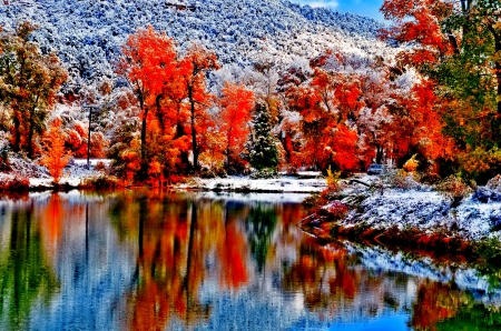 Free Fall Foliage Wallpaper Autumn Winter Other Amp Nature Background Wallpapers On