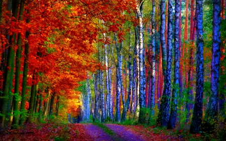 Fall Foliage Wallpaper Screensavers October Other Amp Nature Background Wallpapers On Desktop