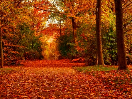 3 Creen Wallpaper Fall October Other Amp Nature Background Wallpapers On Desktop