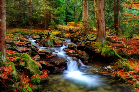 Fall Foliage Wallpaper Screensavers Autumn Creek Forests Amp Nature Background Wallpapers On
