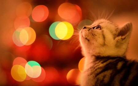 Cute Merry Christmas Wallpaper Backgrounds Christmas Cat Cats Amp Animals Background Wallpapers On