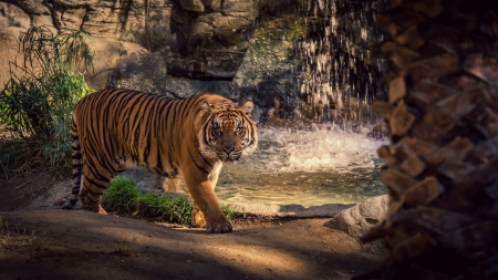 Saber Tooth Tiger 3d Wallpaper Intimidating Tiger Cows Amp Animals Background Wallpapers