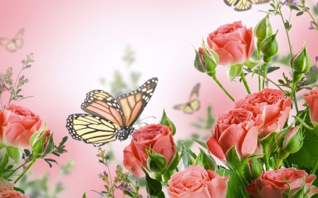 Pink Feathers Falling Wallpaper Roses And Monarch Butterflies Flowers Amp Nature