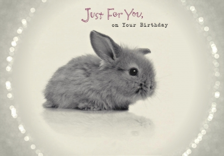Cute Rabbit Wallpaper Free Download Happy Birthday Other Amp Abstract Background Wallpapers