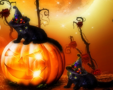 Cat In Fall Wallpaper Background Halloween Kittens Cats Amp Animals Background Wallpapers
