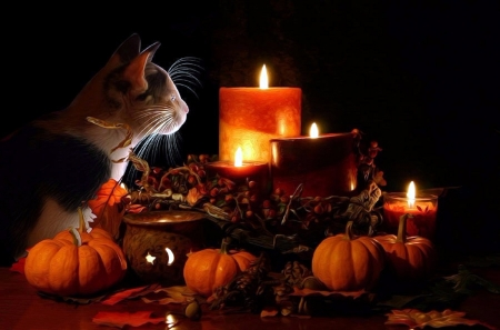 Pumpkins And Fall Leaves Wallpaper First Halloween Cats Amp Animals Background Wallpapers On