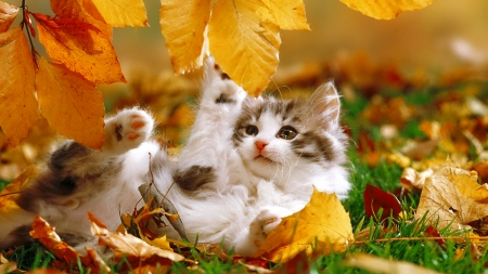 Puppies And Fall Wallpaper Fall Kitty Cats Amp Animals Background Wallpapers On