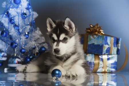 Cute Merry Christmas Wallpaper Dogs Christmas Puppy Dogs Amp Animals Background Wallpapers On
