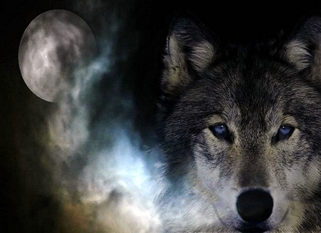 Desktop Wallpaper Wild And Free Quote Wild Spirit Wolf Other Amp Animals Background Wallpapers