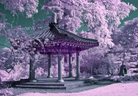 Chinese Garden - Other & Nature Background Wallpapers on ...