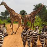 Je to oficiální: Jihoafrická republika nejkrásnější zemí na planetě
