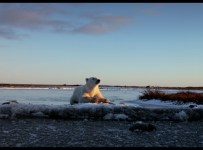 Wonders of the Arctic Blu-ray screen shot 20
