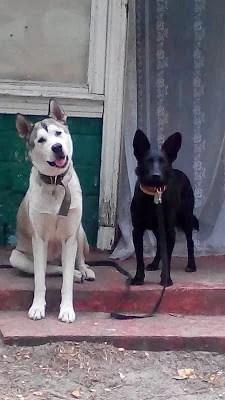 Отдых с собакой в Украине