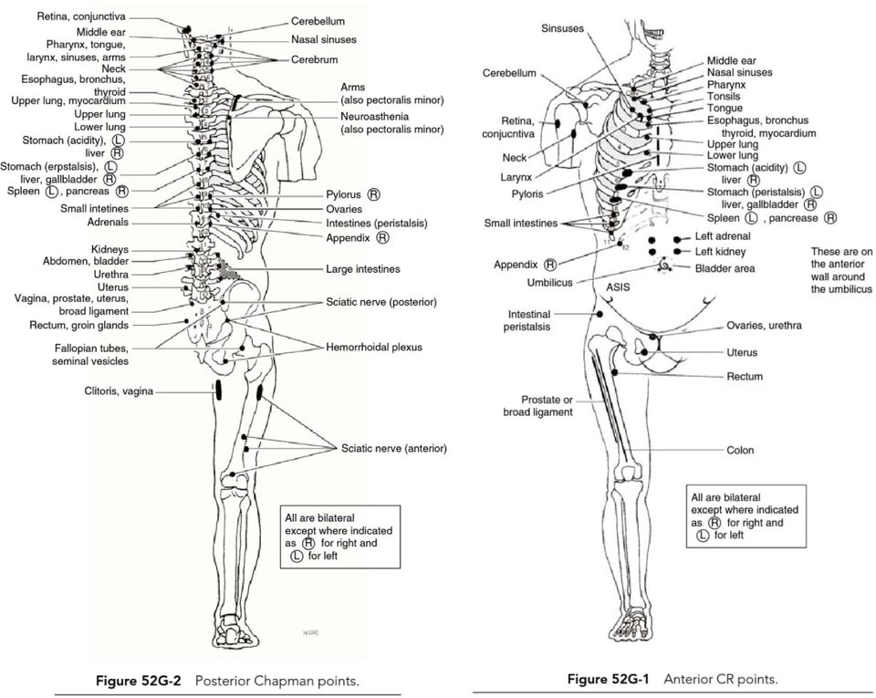 Relationship Between Chapman\u0027s Reflexes and Acupuncture Meridians by
