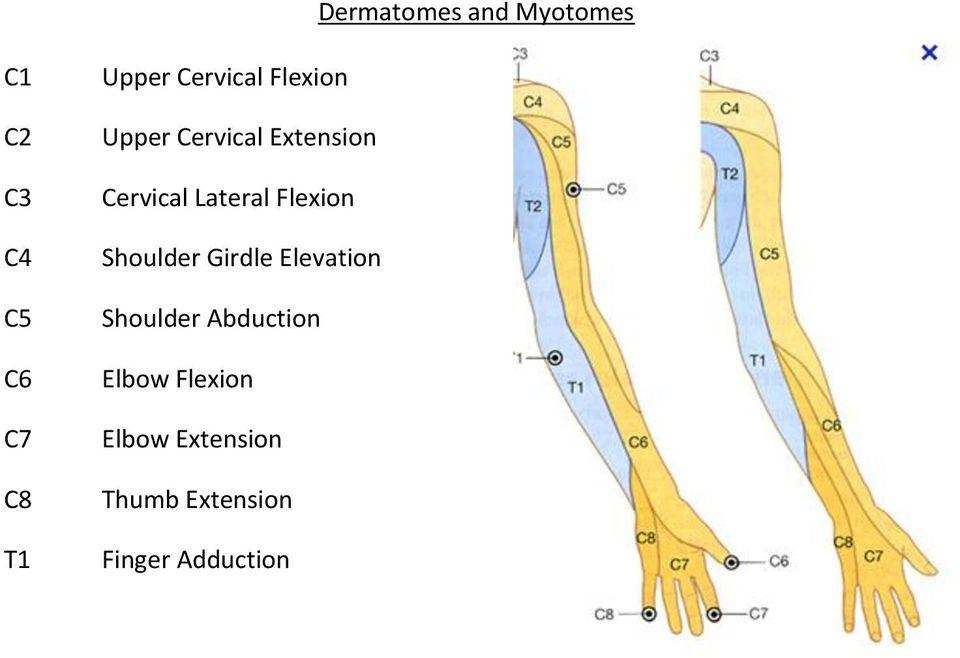 Dermatomes and Myotomes - PDF