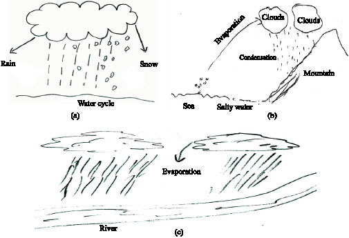 Science Students\u0027 Misconceptions of the Water Cycle According to