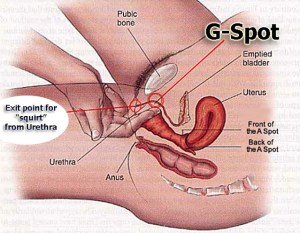 gspot-and-squirt-diagram-finished