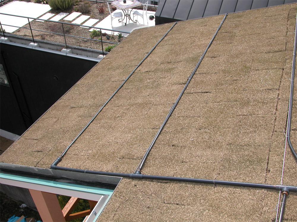 屋上緑化の様子1