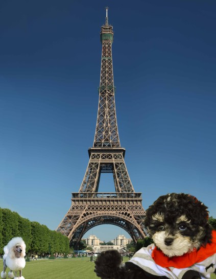 Eiffel_Tower_Holly