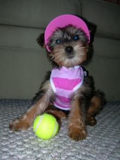 10437382-tennis-anyone
