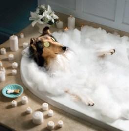 dog_in_spa_bath