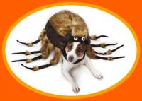 Dog Costumes Large Dogs  The Dog Bunker
