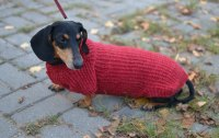 Standard Long Haired Dachshunds Clothing Now They Are a ...