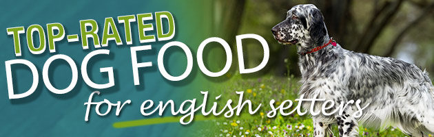 Best Dog Food for an English Setter Dog Food Guru