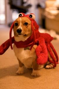 Red Lobster - Dog Fort