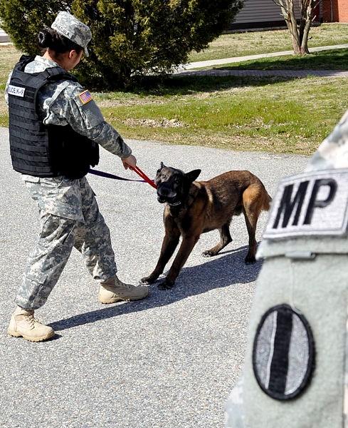 Tug of War With Dog