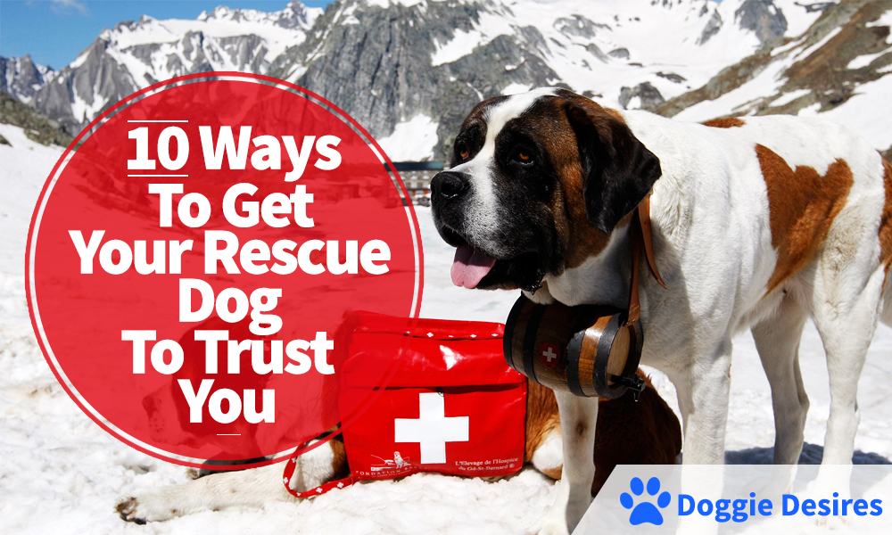 Ways To Get Your Rescue Dog To Trust You