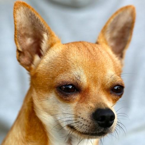 How To Speak Dog Body Language