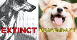 Neat Extinct Dog Breeds That You Probably Know About Extinct Dog Breed Found All Extinct Dog Breeds