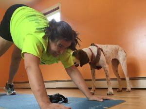 Downward Dog Coach