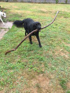 Big Stick!