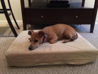 11 Best Dog Beds for Labs | Dog Guide 4u