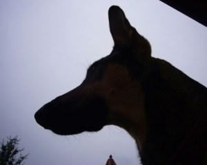 Schatten Cleo