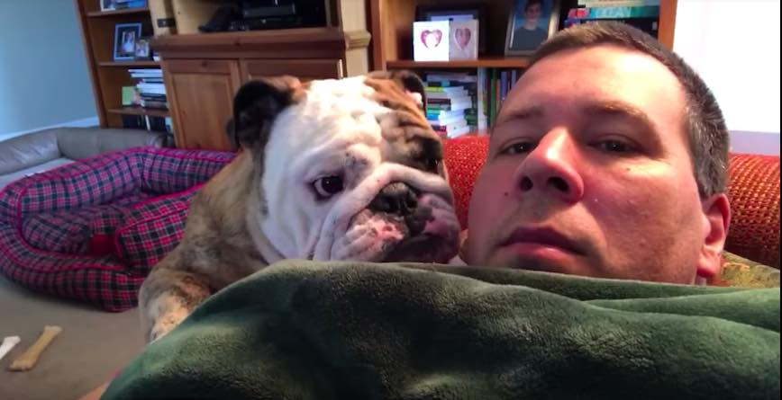 Relax Couch Bulldog Throws Hilarious Temper Tantrum When He Doesn't