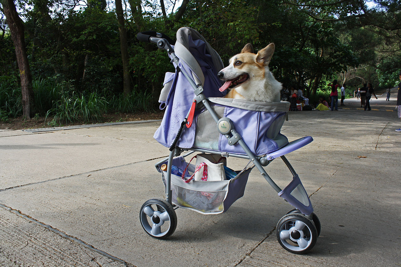 Dog Strollers For Dachshunds Dog Stroller For Large Dogs Reviewed Dog N Treats