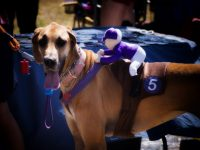 6 Funny Dog Halloween Costumes You Can Make With Little Or