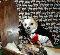 Pictures Of Dogs Wearing Halloween Costumes | The Dog Guide