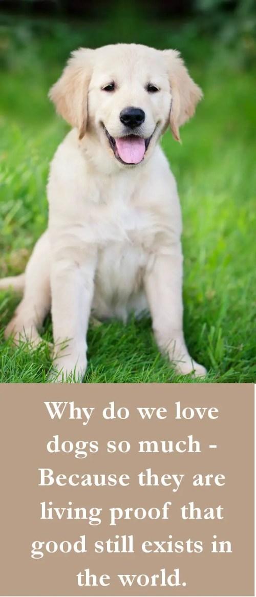 Medium Of Funny Dog Quotes