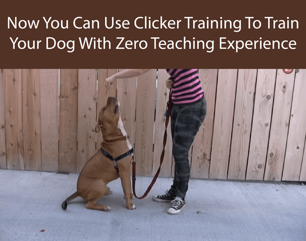 Using Clicker Training To Train Your Dog