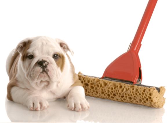 New Puppy Potty Training New Puppy Potty Training! New Puppy Potty Training! pottytraining