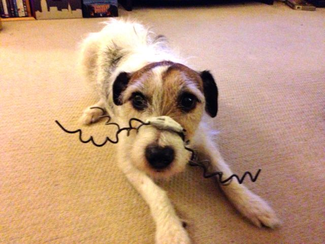 Sammy The Jack Russell Dogs On Camera