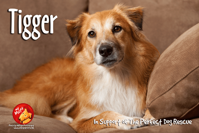 How To Make Your Dog A Therapy Dog In Pa