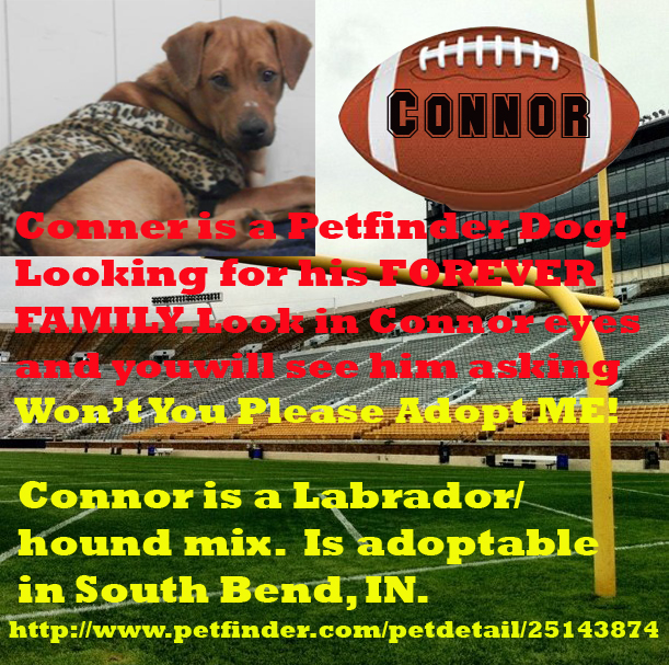 Connor needs a forever home. He is in South Bend, IN.