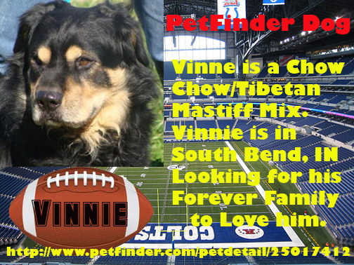Vinnie needs a forever home. He is in South Bend, IN.