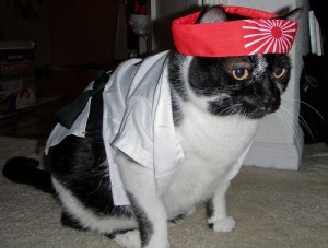 Our cat, Kid, dressed as karate cat