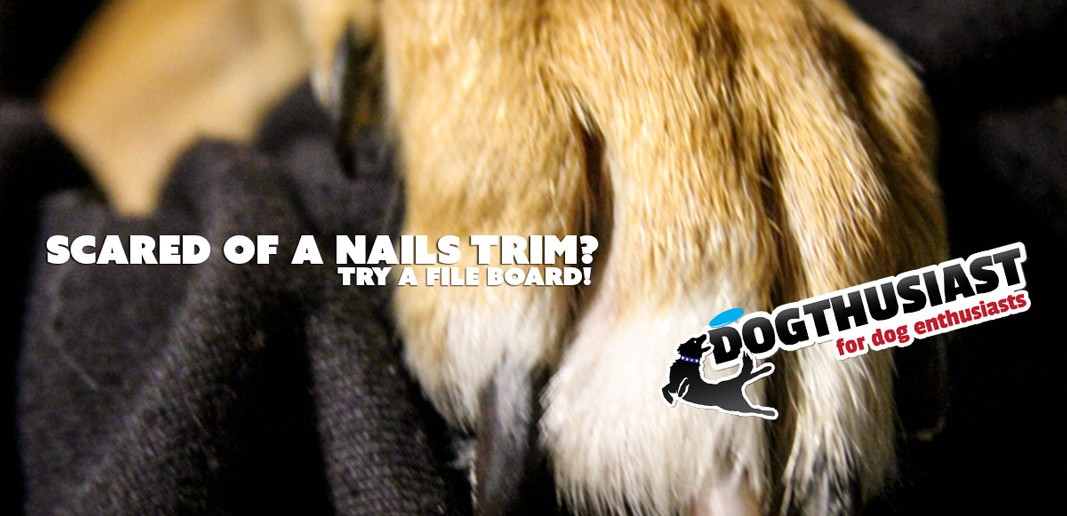 dog scared of nails trim - tips and solutions